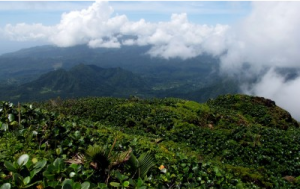 © Discover Dominica